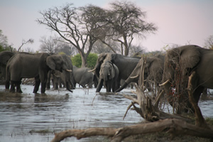 travel-adventures-botswana-self-drive-safari-1