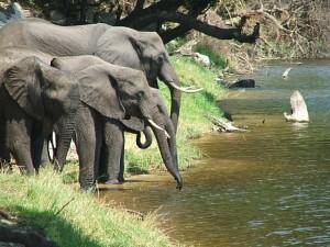 travel-adventures-botswana-contact