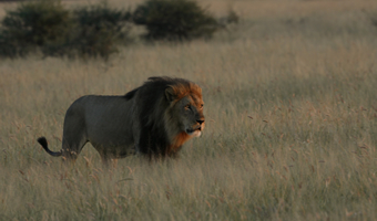 Why book with us-Travel Adventures Botswana 5