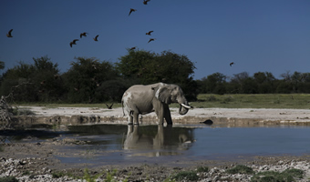 Why book with us-Travel Adventures Botswana 7