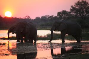 Travel-adventures-botswana-self-drive-safari-4