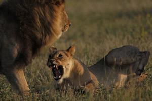 Travel-adventures-botswana-self-drive-safari-2