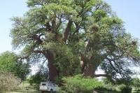 travel-adventures-botswana-4x4-vehicles-hilux-5