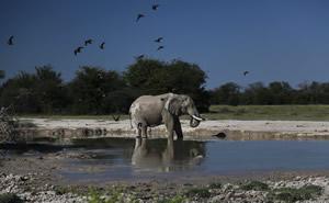 travel-adventures-botswana-national-parks