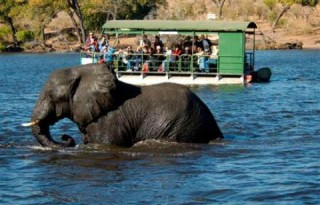 chobe-national-park-1