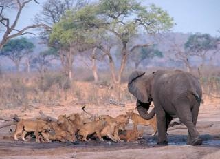 Chobe-National-Park-4
