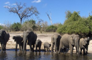 chobe-national-park