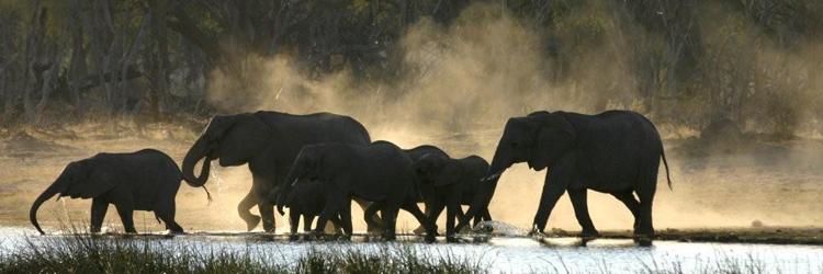 sango_safari_camp_header