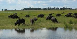 Chobe Riverfront Serondela 2