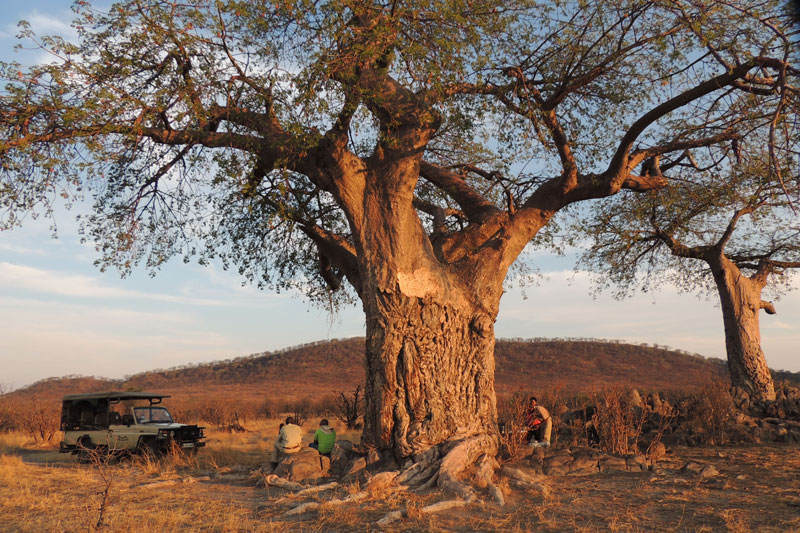 ghoha-hills-sundowners-under-the-baobab-tree