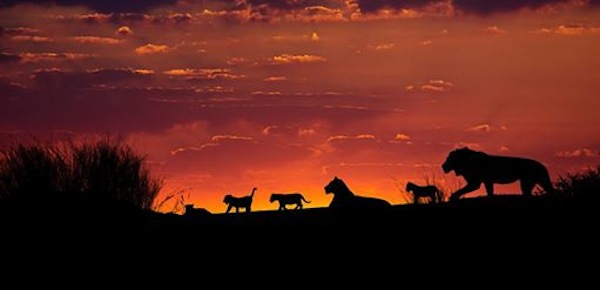 photographic-safaris-1