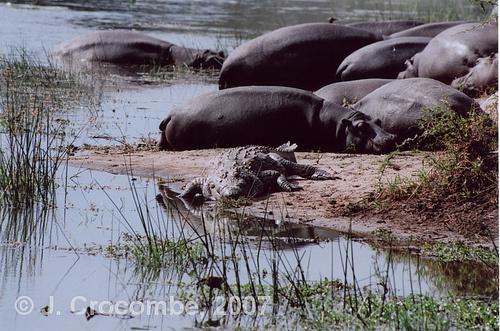 photographic-safaris-2